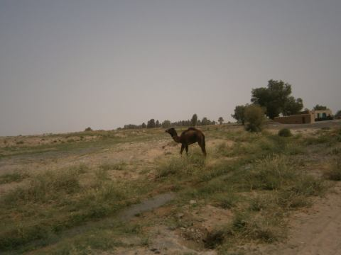 10 Camel
